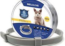 meilleur collier anti-puces pour chat