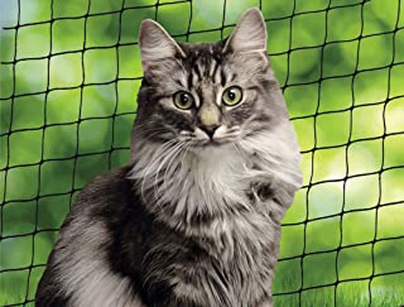 ᐅ Le meilleur filet pour chat en 2020 !