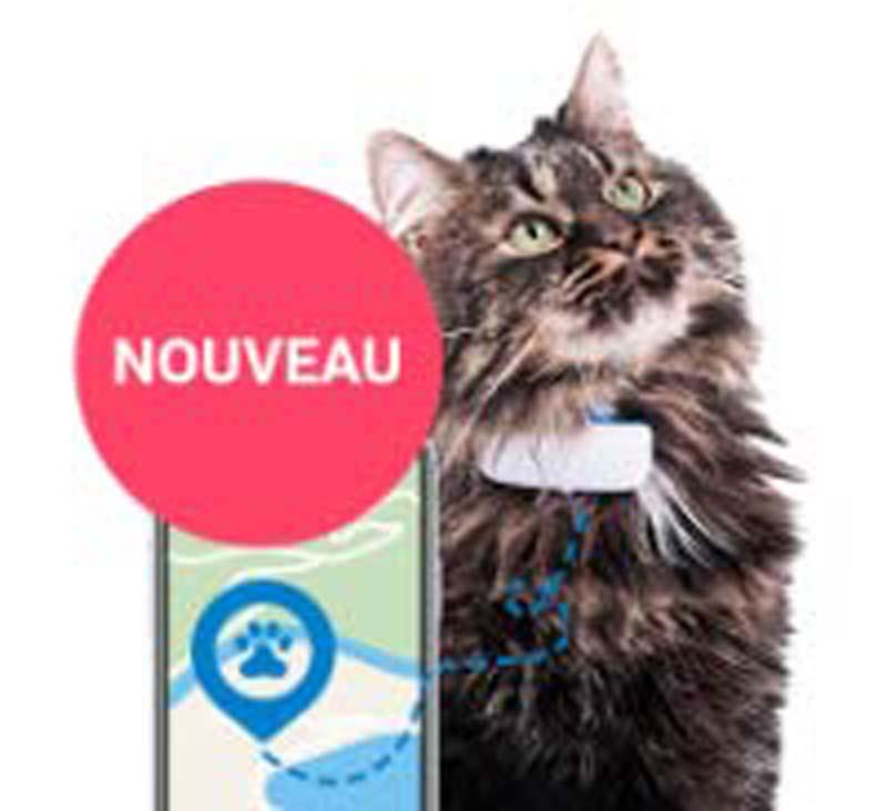 ᐅ Le meilleur GPS pour chat en 2020 !