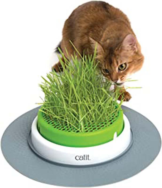 ᐅ La meilleure herbe pour chat en 2021 !